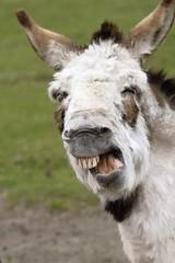 Donkey protest