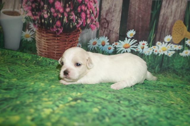 Bonita 14 oz 2 weeks old (18)