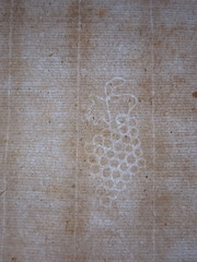 1686 grape with leaf watermark
