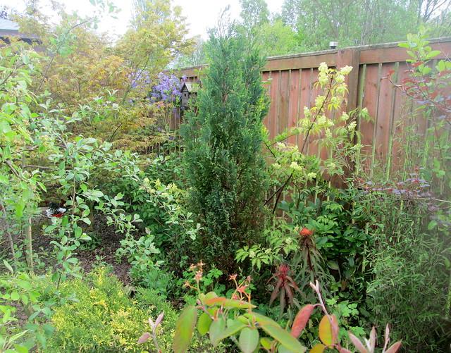 My Garden in Fife