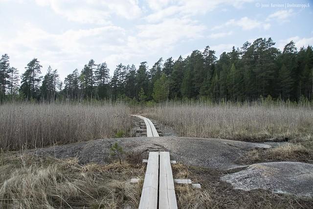Pitkospuita Teijon kansallispuistossa
