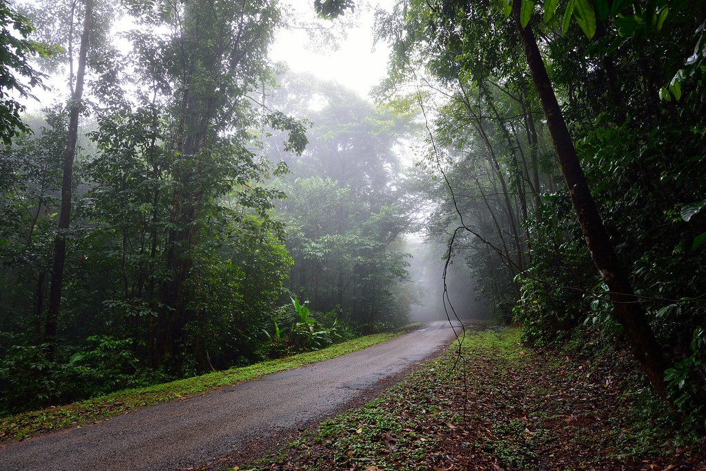 Dead end road into the rain forest