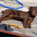 Dog on a boat at Preston Docks