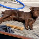 Dog on a boat at Preston Docks