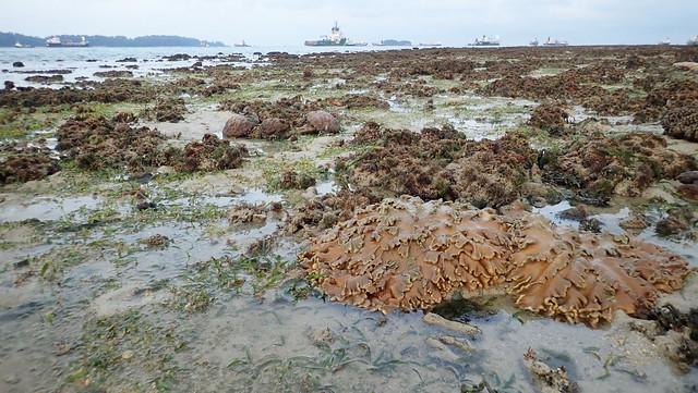 Living shores of Terumbu Pempang Laut, May 2019