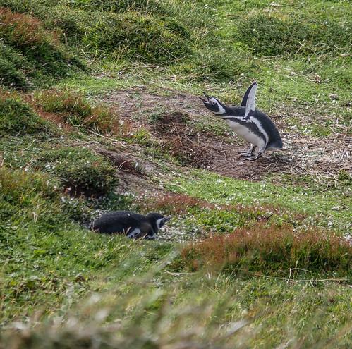 Falklands (Malvinas) (10 of 33).jpg