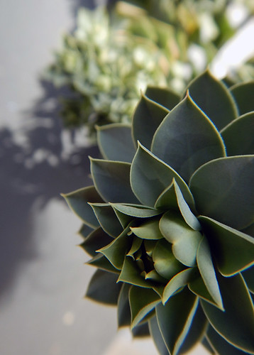 Succulent in a planter