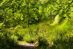 HolderBlackhouse Wood in Spring