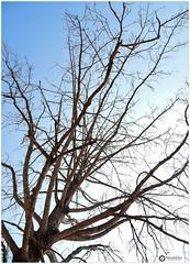 A Summer Tree