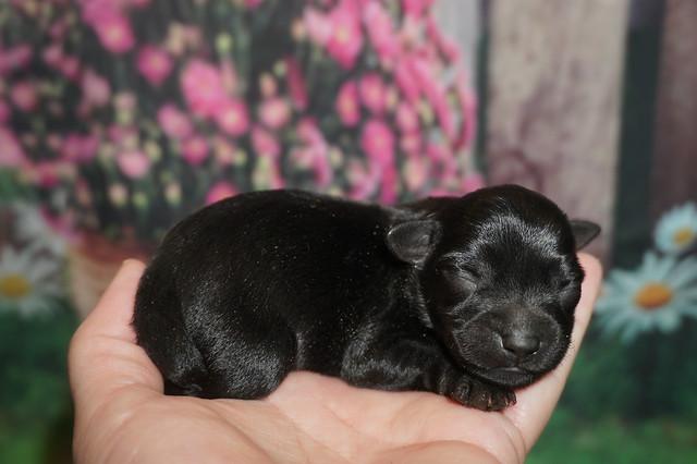 1 Maggie  5.9 oz 2 days old (3)