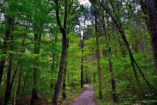 I Am Undertaking a Path That Leads Me Onward... (Mammoth Cave National Park)