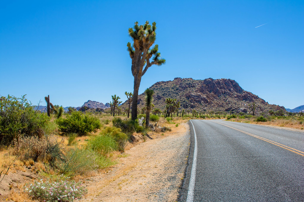 Driving through Joshua Tree