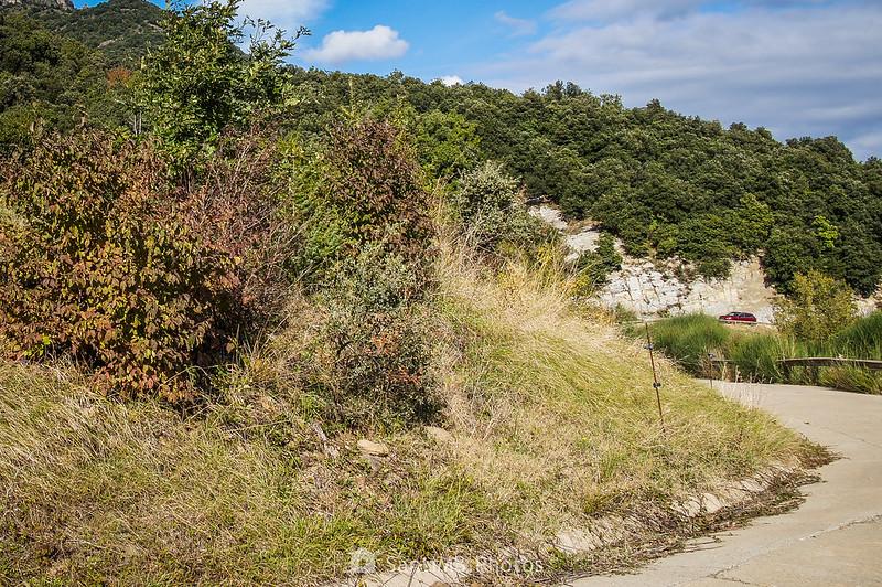 Camino desde Santmateu hacia La Carrera