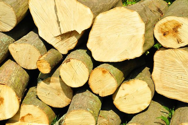 Wald_Holz_Brennholz_Baumstämme_Holz vor der Hütte