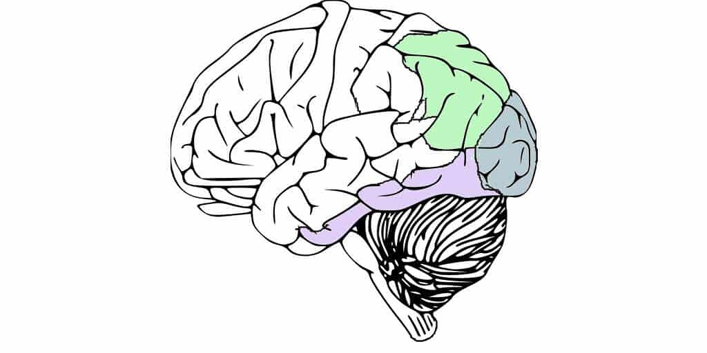 cortex-visuel-réseaux-neurones-stimulation