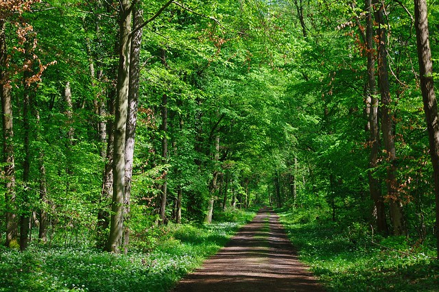 In the forest - Im Wald
