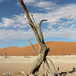 28. Aprill 2019 - 8:08 - Toter Baum im Dead Vlei in der Namib Wüste Namibia!  Thanks for your visit!