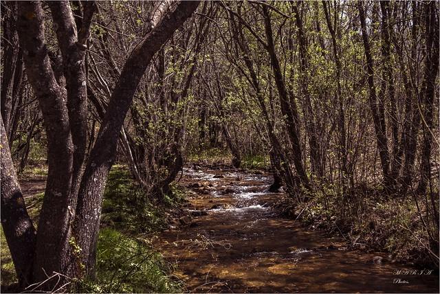 Cuando cantan los arroyos en el bosque.