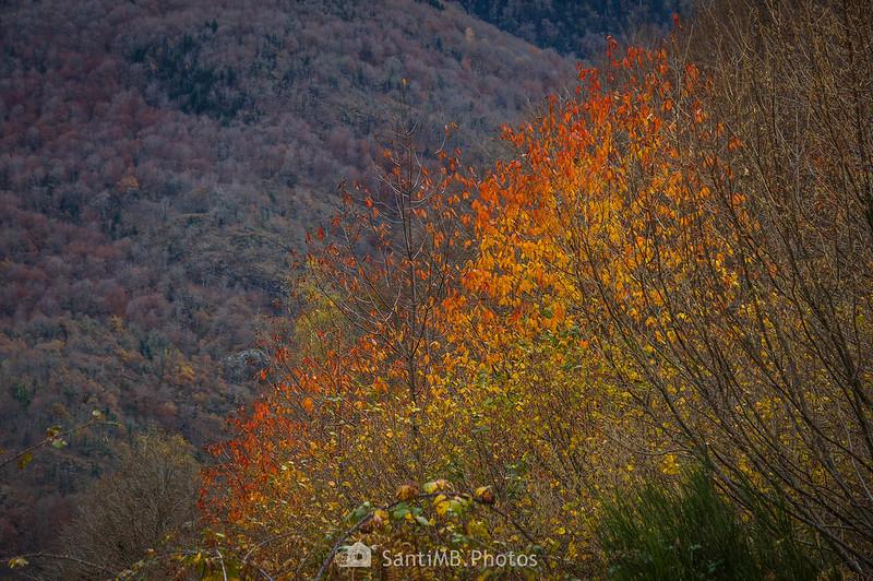 Colores de otoño en el Bosque de Carlac