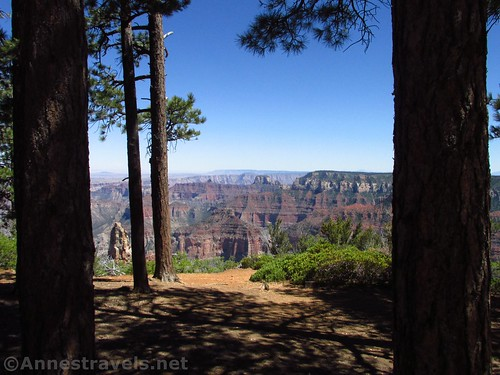 Views through the trees near the east end of the Ken Patrick Trail on the north rim of Grand Canyon National Park, Arizona