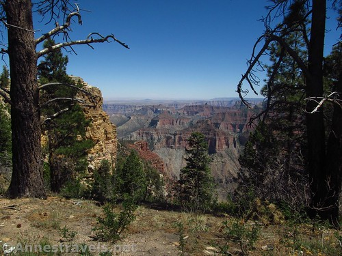 Many of the early views are obstructed by trees and the nearby rock outcrops along the Ken Patrick Trail on the north rim of Grand Canyon National Park, Arizona