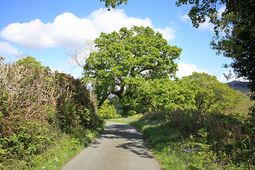 Country lane in Wales