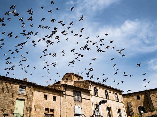 Pézenas pigeons