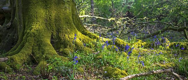 moss like velvet