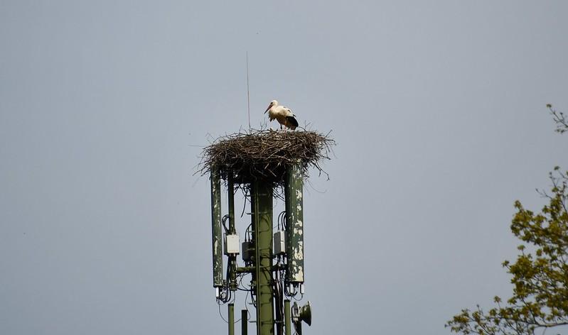 Stork 07.05 (3)