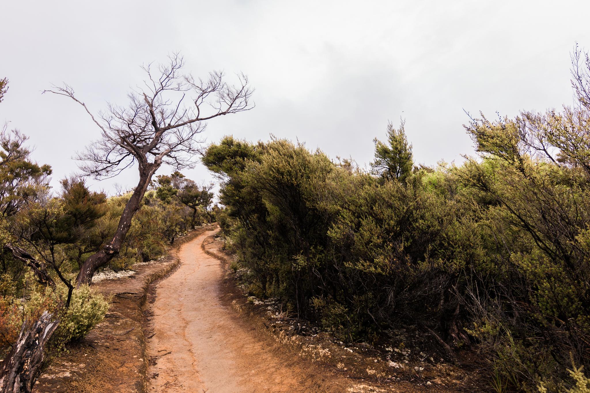 Abel Tasman national park-14
