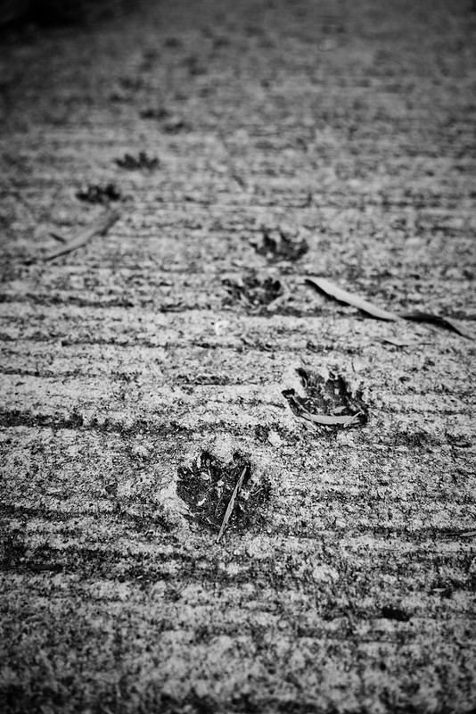another angle of footprint