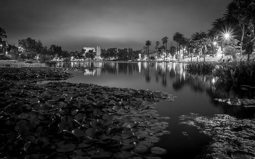 Lotus Nights