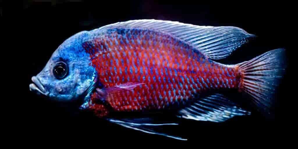 poissons-vision-super-pouvoir