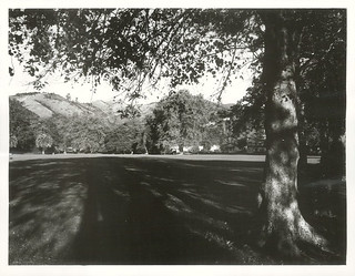 Botanical Reserve, Nelson, 1975