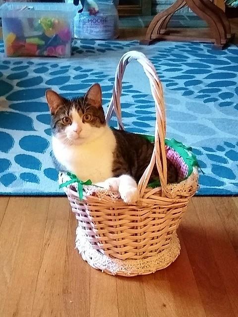 Easter 2019 - Cat in Easter Basket