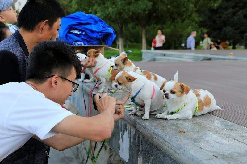 happy Jinchang dog lovers and their dogs1