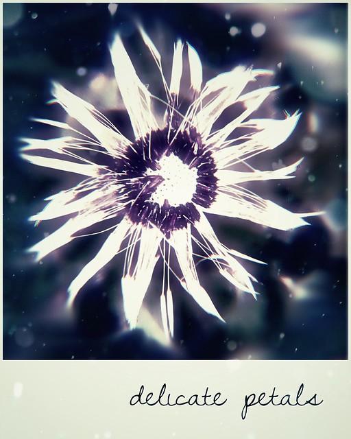 ***delicate petals***