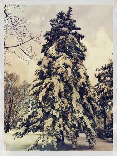yoonalens cheshirefilm winter