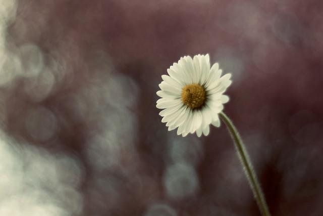 La petite fleur.