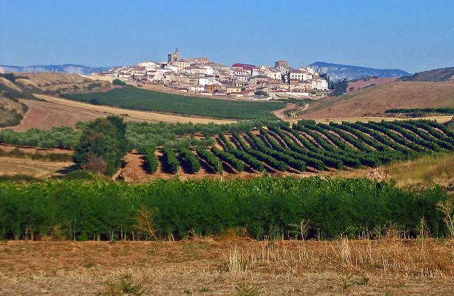 Camino, Cirauqui, Navarre