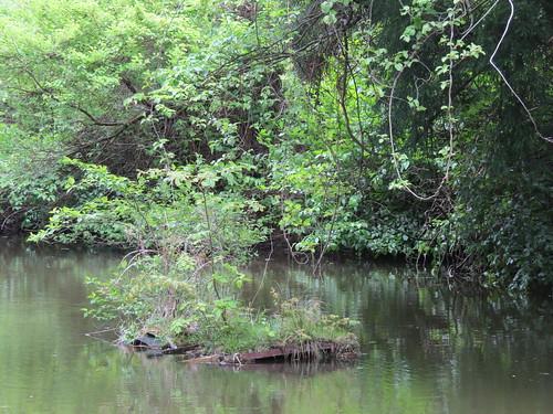 横浜自然観察の森で野鳥観察 沼