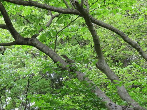 横浜自然観察の森で野鳥観察 リス