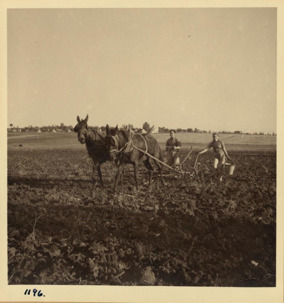 07. Сионистские пионеры сажают кукурузу