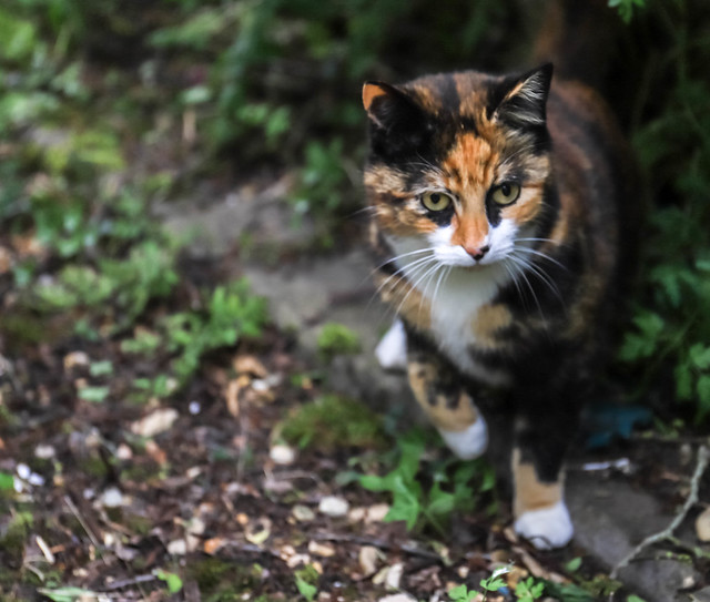 Dory the Cat