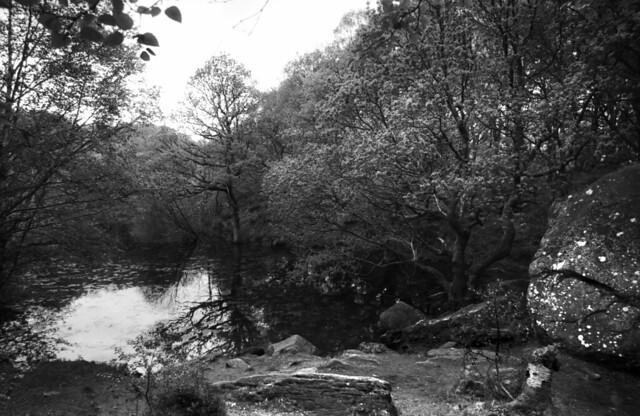 The lake in the woods/llyn yn y goedwig