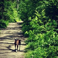 Englewood hike