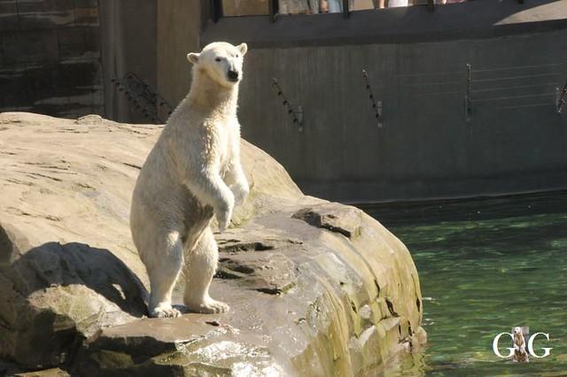 Besuch Zoo Rostock 22.+23.04.201997