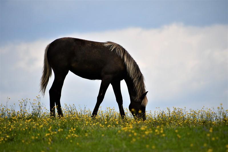 Horses 12.05 (1)