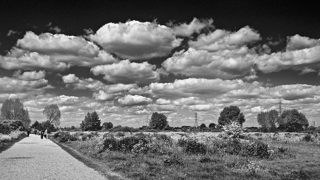 Walthamstow Marsh