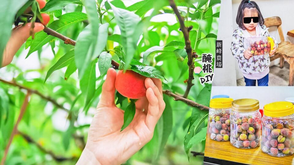 新峰農場 台中新社 醃桃DIY 日光溫泉